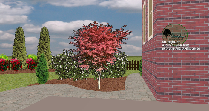 Japanese Maple Viburrnum Landscape Design