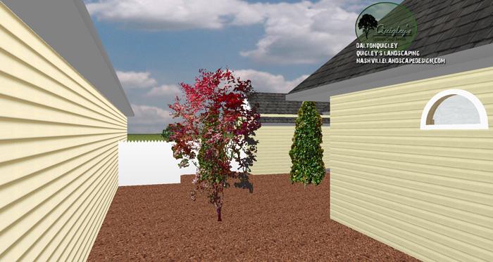 Japanese-maple-courtyard-plain