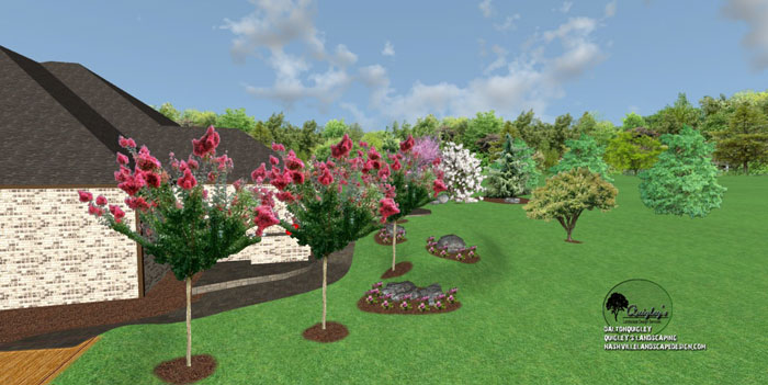 Crape-Myrtle-Landscape-design, for Nashville, Brentwood, Franklin, Spring Hill, and Nolensville TN