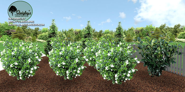 TN-Gardenia-Design