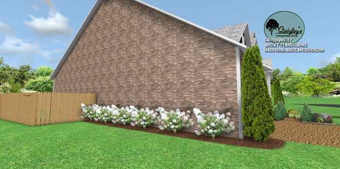Side-yard-hydrangea